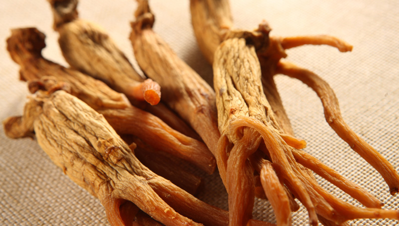 Red korean ginseng root